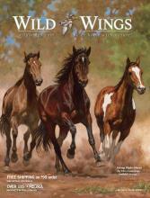 Wild Wings 2020年